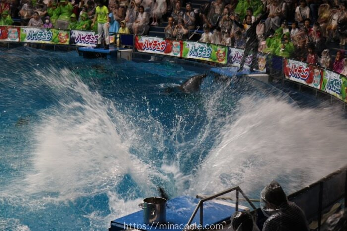 イルカのショーはとにかく水しぶきがすごい!
