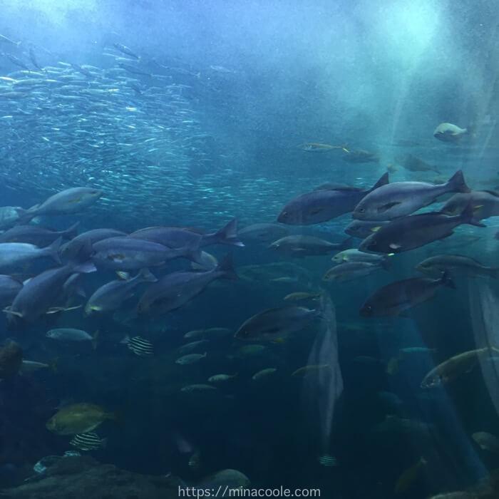 新江ノ島水族館の大水槽