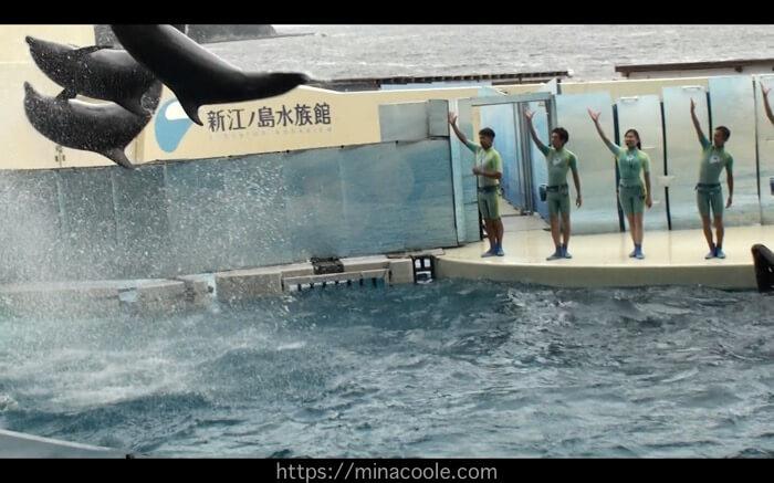 新江ノ島水族館のイルカ・アシカショーは最高