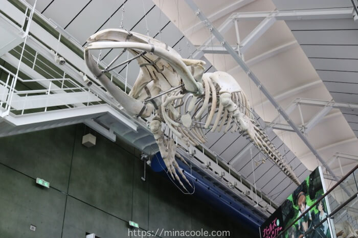 アクアワールド茨城県大洗水族館クジラの標本