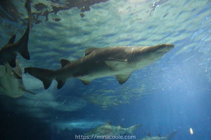 アクアワールド茨城県大洗水族館はサメの飼育数日本一
