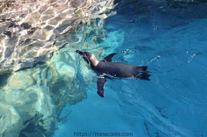 アクアワールド茨城県大洗水族館のペンギン