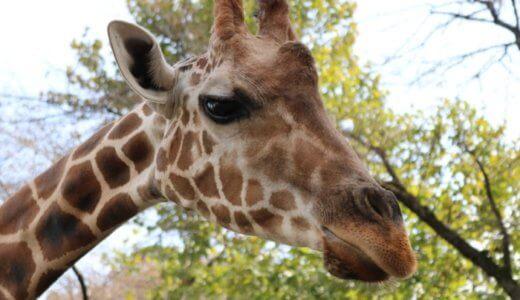 宇都宮動物園に行く前に「知っておけばよかった!」と思ったこと