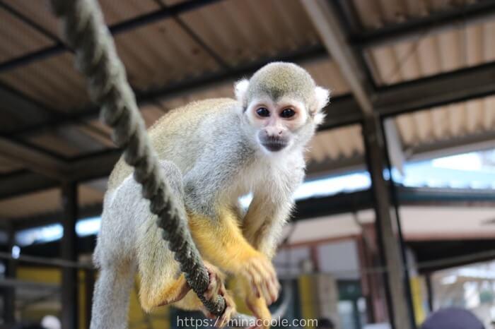 宇都宮動物園のリスザル