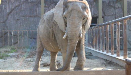 東武動物公園は西ゲートから入園すると1日動物園モード作戦がお得!