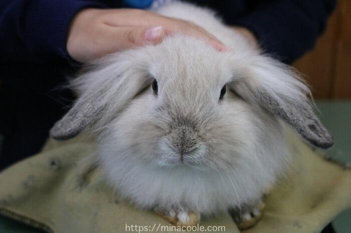 東武動物公園の森のふれあいハウスでウサギとふれあい体験