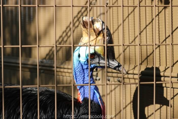 東武動物公園のヒクイドリ