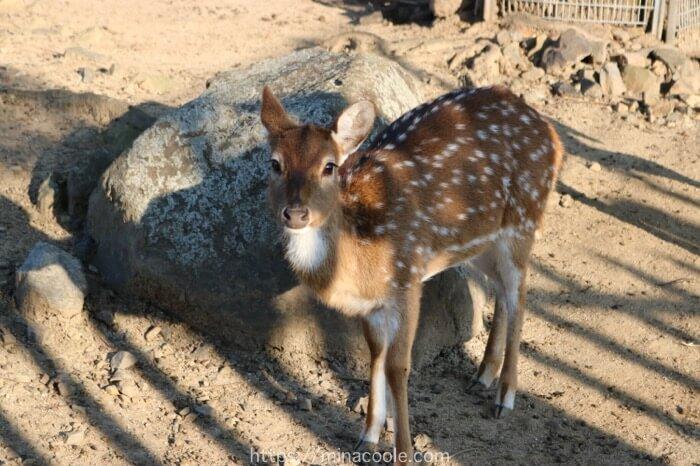 東武動物公園のシカ