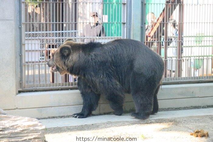 東武動物公園のヒグマ