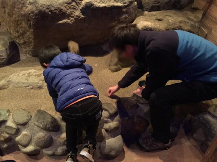 宝石探し トレジャーストーンパークの地下鉱山(ディープサンド)で宝石を見つけたところ