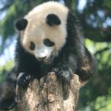 上野動物園のパンダ「シャンシャン」を見に車で行き駐車場で困った事