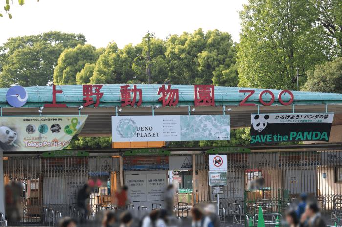 上野動物園の東園・表門のみでパンダ「シャンシャン」の観覧整理券が配られる