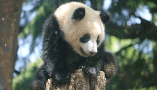 上野動物園は大混雑!持ち込んだお弁当を食べる際に困ったこと