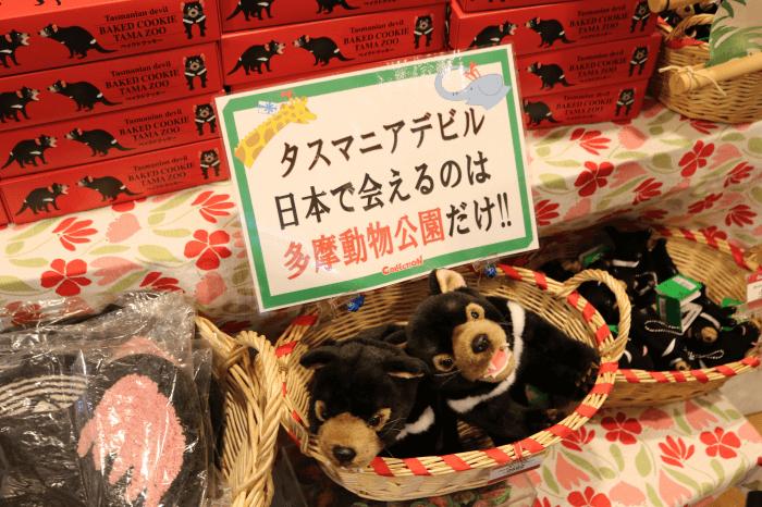 日本で「タスマニアデビル」に会えるのは多摩動物公園だけ!