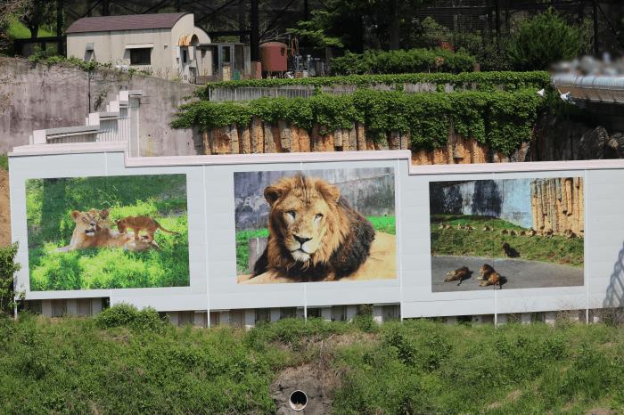 多摩動物公園ライオンの看板