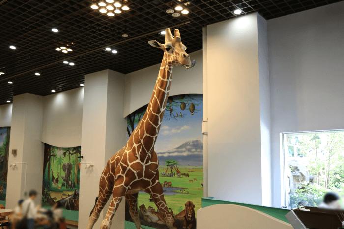 多摩動物公園のカフェ(Zoo Cafe)店内にキリンが!?