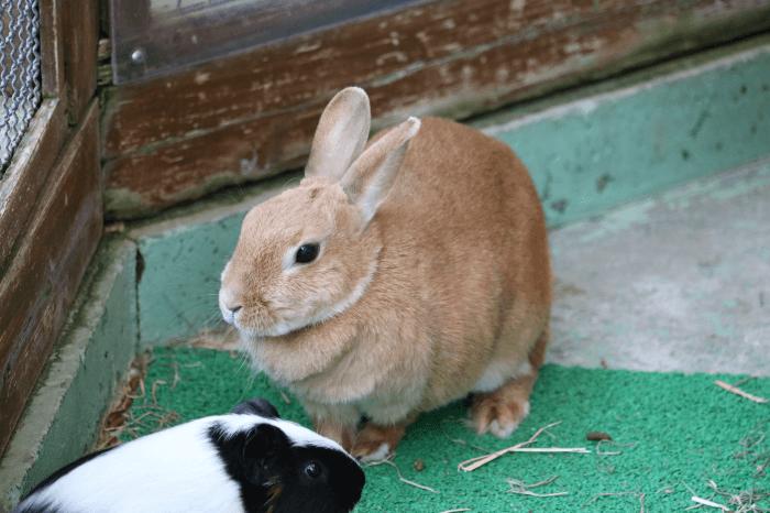 多摩動物公園のノウサギ