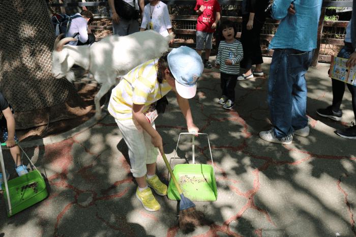 千葉市動物公園のこども動物園でお掃除中のみなちゃん
