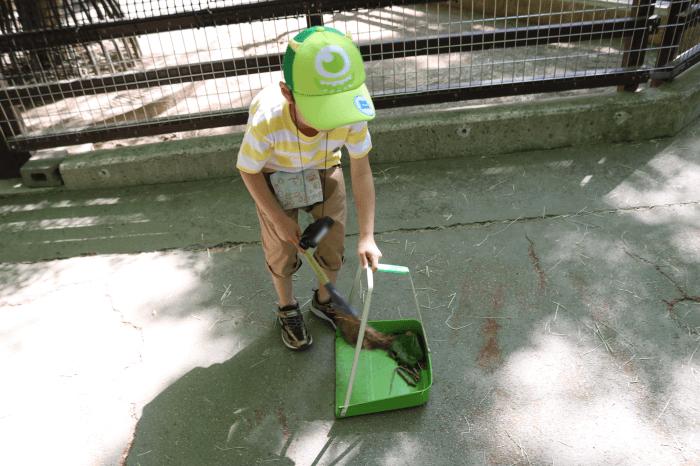 千葉市動物公園のこども動物園でお掃除中のくるくん