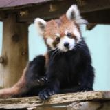 千葉市動物公園はなんと中学以下無料!安いが見どころ満載な動物園