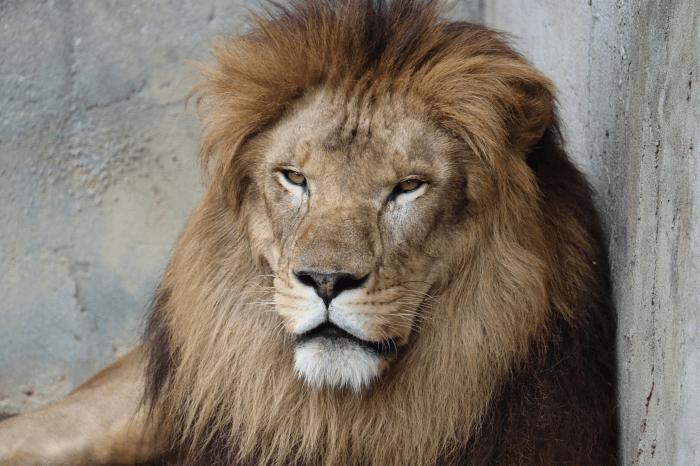 日立市かみね動物園は「家族4人1220円」で行ける本格的な動物園