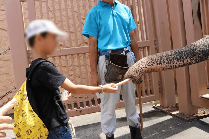 日立市かみね動物園でゾウにエサをあげるくるくん