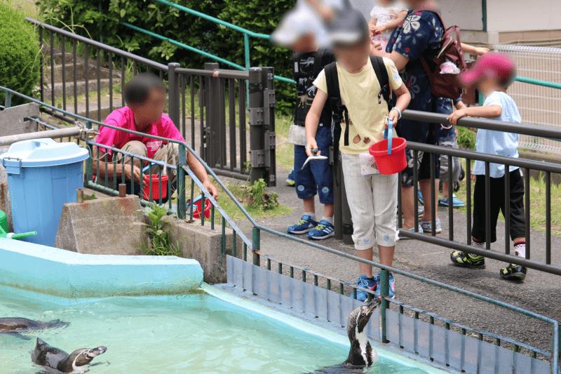 日立市かみね動物園でフンボルトペンギンにエサの魚をあげるみなちゃん
