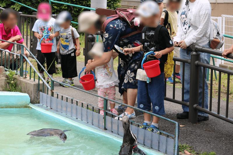 日立市かみね動物園でフンボルトペンギンにエサの魚をあげるくるくん
