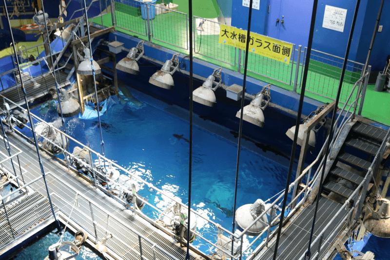 アクアワールドの知られざる魅力「水族館探検ツアー」