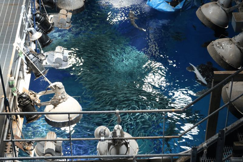 アクアワールド「バックヤードウォーク」と「水族館探検ツアー」の違い