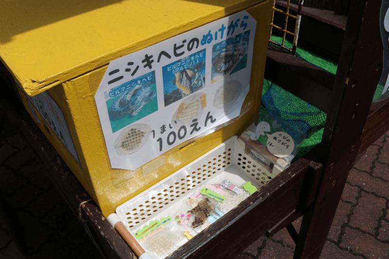 「ふれあい動物広場」でニシキヘビのぬけがらを購入