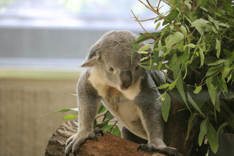 横浜市立金沢動物園は子供が入園無料となる土曜日がお得でおすすめ