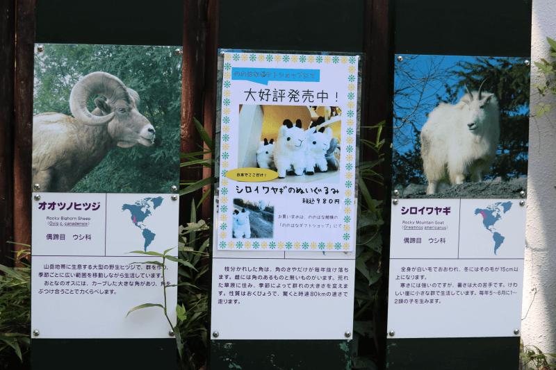 金沢動物園のオオツノヒツジとシロイワヤギ