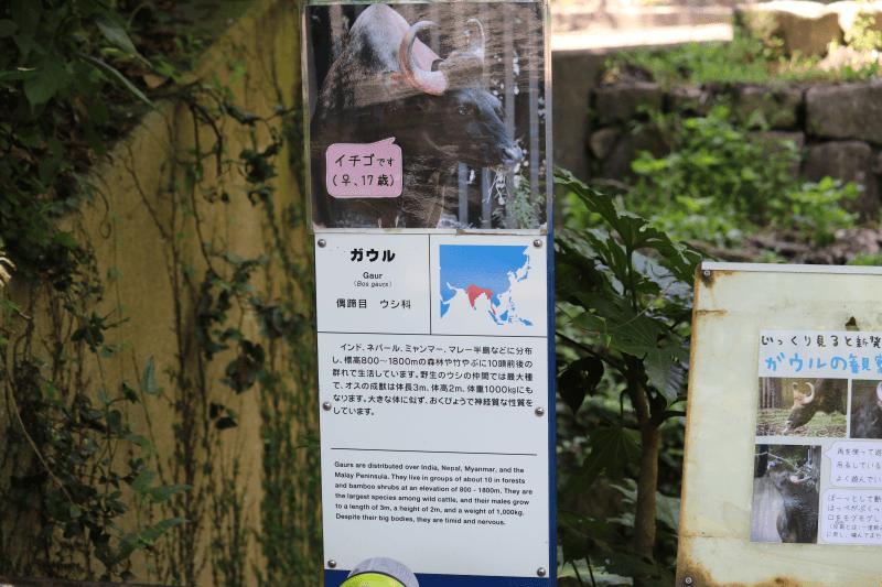 金沢動物園のガウル