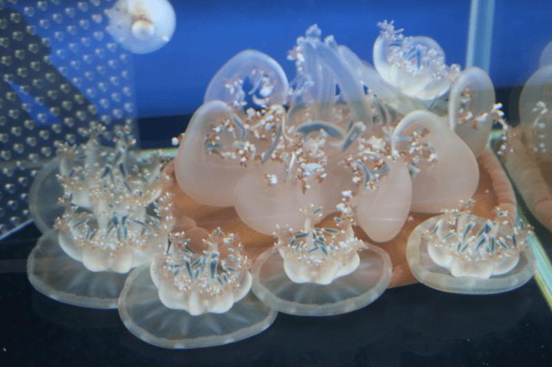 すみだ水族館のクラゲ