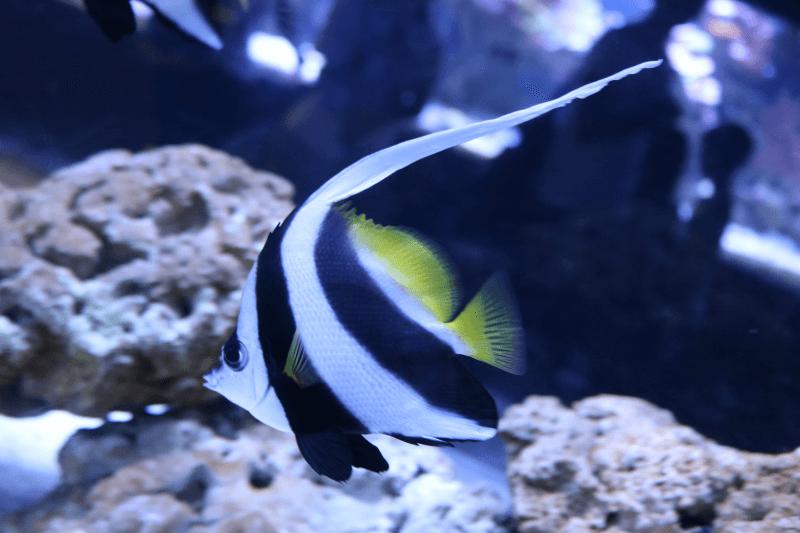 すみだ水族館の魚