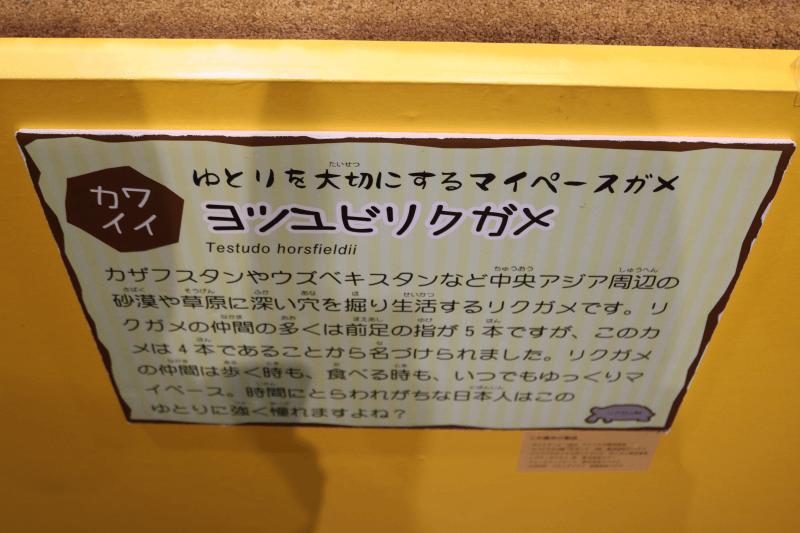 ミツユビリクガメ