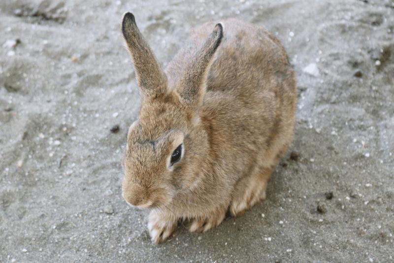 むさしの村「ふれあい牧場」ウサギ