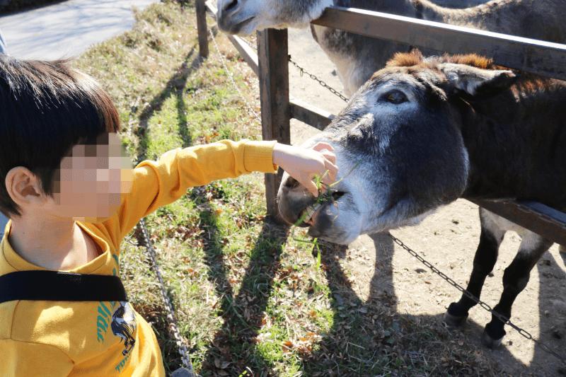 群馬サファリパークのウォーキングサファリゾーンでロバにエサをあげているところ