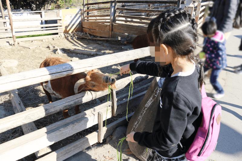 群馬サファリパークのウォーキングサファリゾーンでヤギにエサをあげているところ