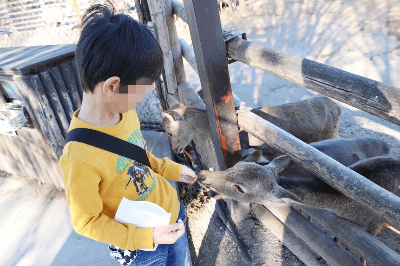 群馬サファリパークのウォーキングサファリゾーンで鹿に鹿せんべいをあげるくるくん