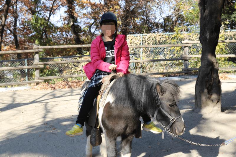 群馬サファリパークのリトルファームでポニーライドに挑戦