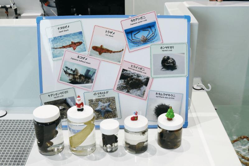 アクアワールドのタッチングプールは水の生き物の種類が増えた